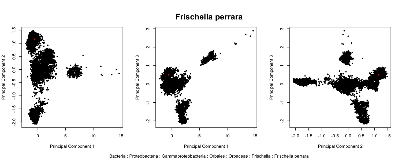 Taxonomy of the species Frischella perrara Engel et al. 2013